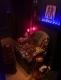 Shane-Sia-Room-2_Photo-taken-by-Rad-Magazine_NEWS_Installation